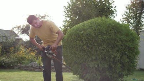 Man trimming a shrub