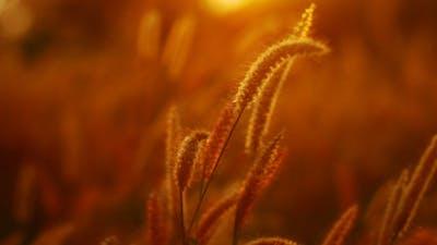 Countryside Grass