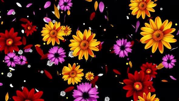 Thumbnail for Color Flowers 4K