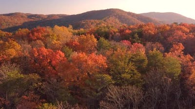 The Autumn Season Turn Forest Into A Colorful Scenery