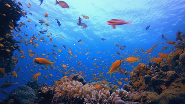 Thumbnail for Underwater Tropical Fish
