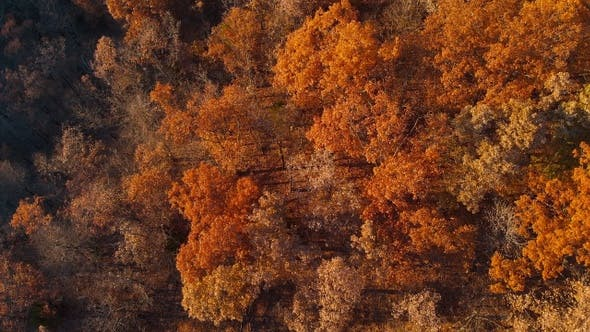 Thumbnail for Aerial Over Autumn Fall Trees