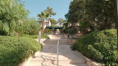 Palm Trees Resort