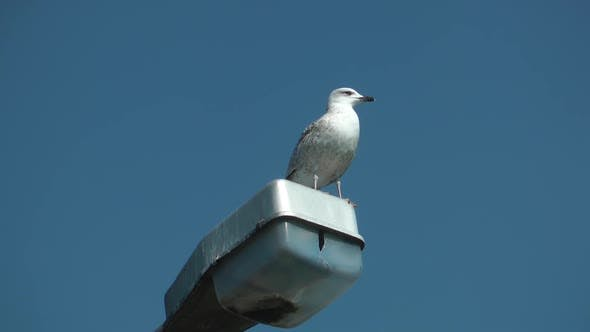 Thumbnail for Bird Standing Old Electric Pole And Looking