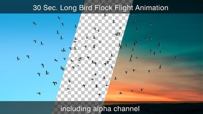 Bird Flock With Alpha Channel