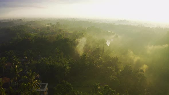 Thumbnail for Morning Fog and Rain Over the Brazilian Rainforest of the Amazonas