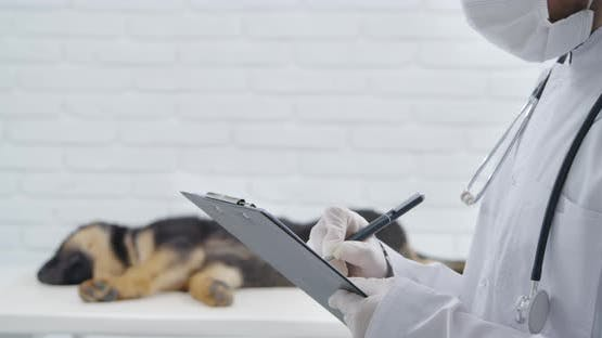 Veterinary Doctor Recording Results of Medical Examination