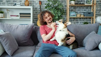 Loving Pet Owner Playing with Beautiful Corgi Dog, Animal Licking Man's Hands
