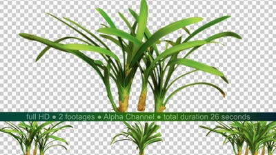 Real Plants
