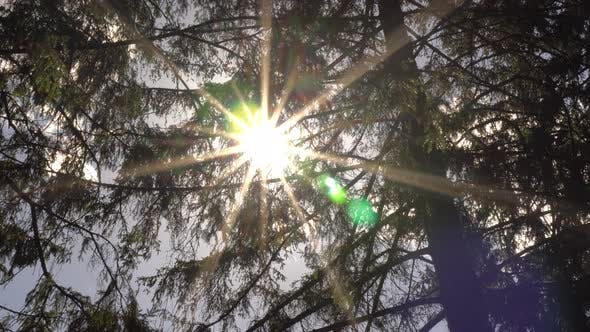 Cover Image for Sun Ray In The Leaves Of The Trees