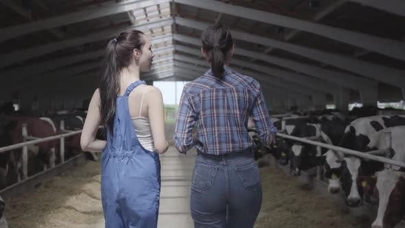Thumbnail for Young Girls Farmers Making a Tour of the Barn with Cows on the Farm