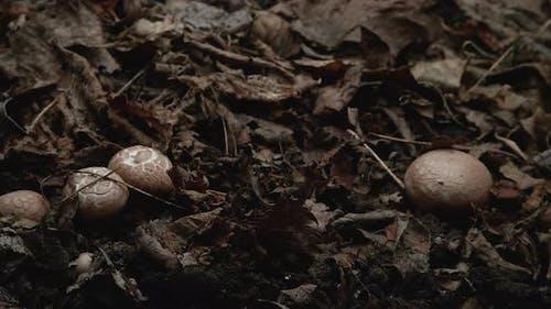 Timelapse of Mushrooms Growing