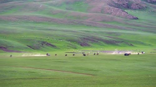 Langstrecken-Pferderennen auf der Weide