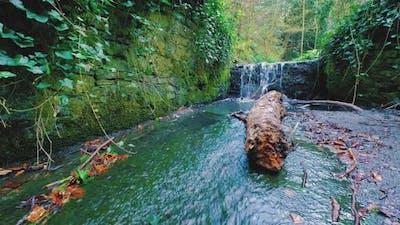 Irish Forest River