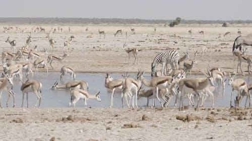 Crowded African Waterhole