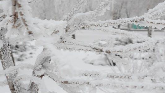 Thumbnail for Winter 12