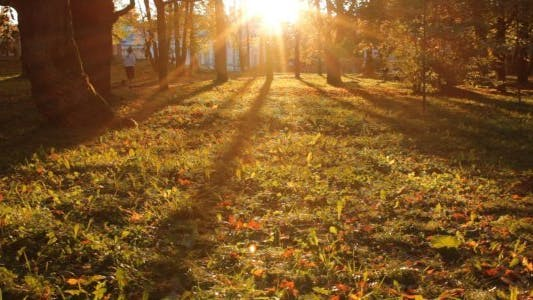 Thumbnail for Sunset in a Park in Autumn - 01