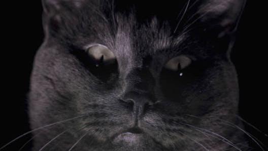Thumbnail for Black Cat