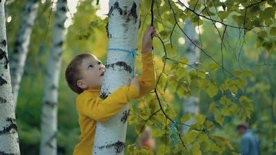 Child Climbs Up the Tree Close Up 2