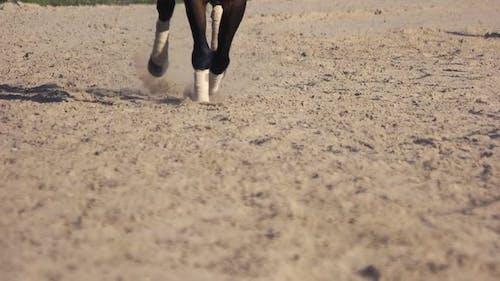 Pferderennbahn mit galoppierenden Pferdehufen