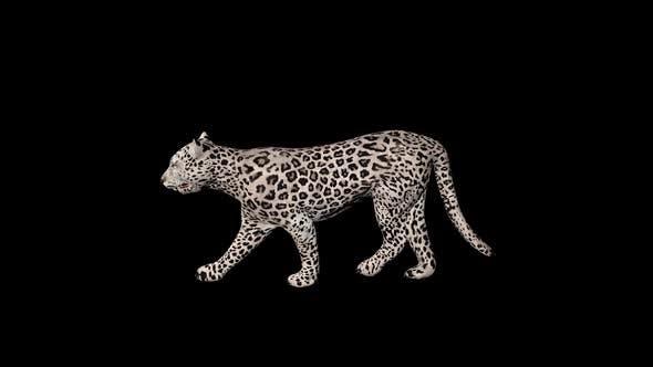 Thumbnail for Snow Tiger Walk