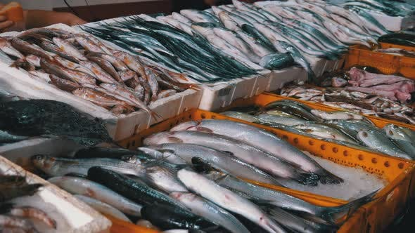 Thumbnail for Fresh Sea Fish in Ice Sold on the Showcase of Seafood Street Market.