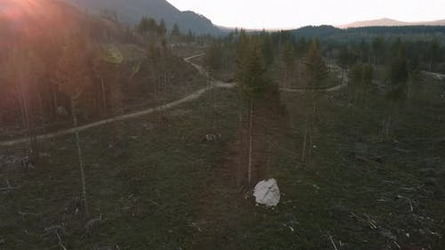 Drone View Of Deforestation Destruction On Forest Trees