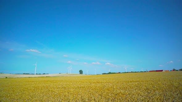 Wheat fields and wind turbines, panorama