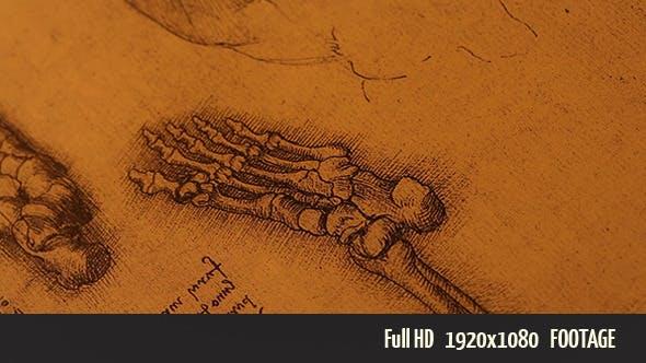 Thumbnail for Anatomy Drawings 1