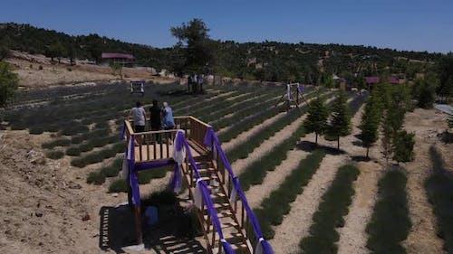 Lavender Garden Observation Deck Purple