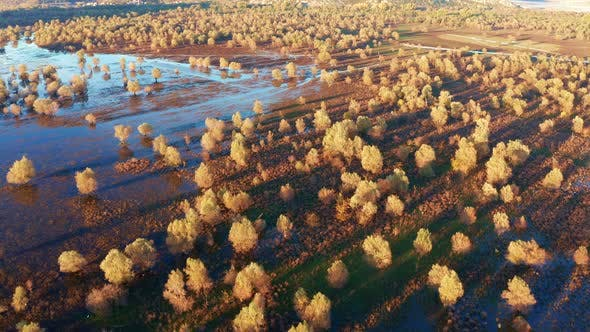 Yellow trees on a flooded field casting long shadows, on a sunny afternoon. Beautiful landscape