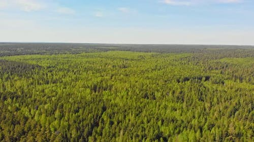 A Huge Thicket of Coniferous Forest