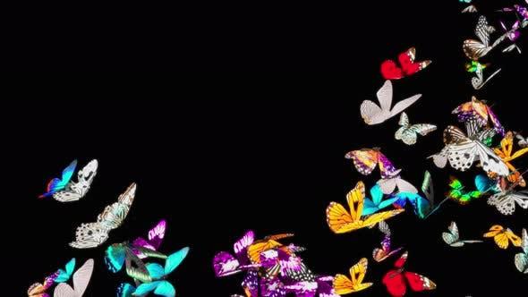 Butterfly 4K