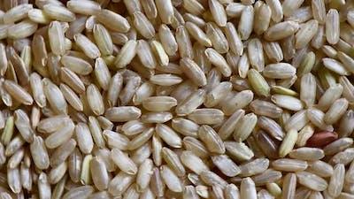 Brown Rice rotation