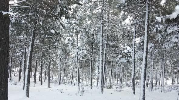 Gefrorene Bäume bedeckte Schneit