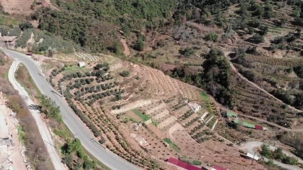 Banana plantations in spring, Alanya, Turkey.