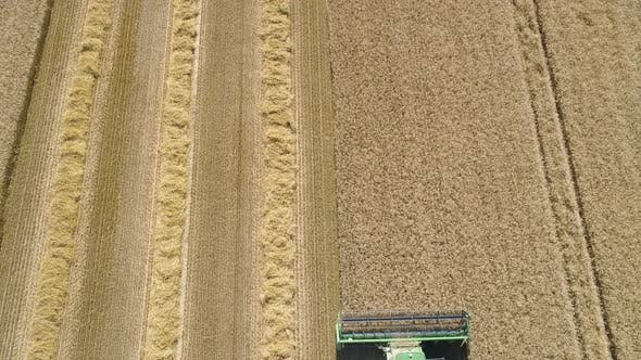 Thumbnail for Combine Harvester on Wheat Field