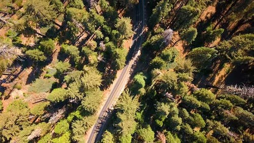 Aerial View of the Sequoia National Park Forest