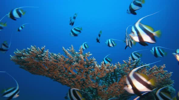 Thumbnail for Tropical Marine Life Fish