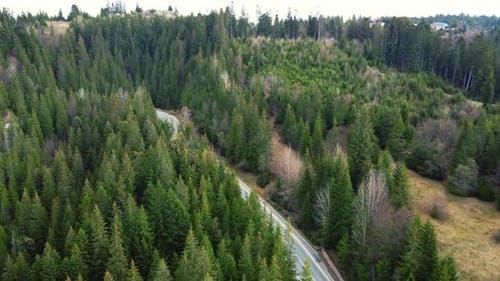 Evergreen Fir or Pine Tree Forest