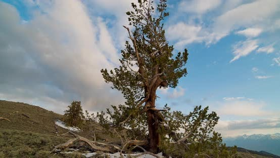Thumbnail for Time lapse of the clouds moving behind a Bristlecone Pine Tree