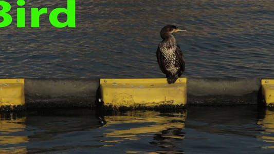 Cover Image for Bird