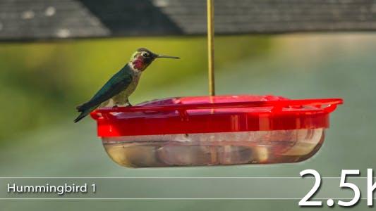 Thumbnail for Hummingbird 1