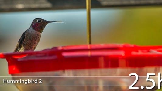 Thumbnail for Hummingbird 2