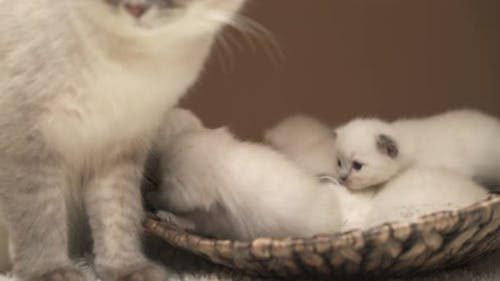 Mummy and Baby Cats