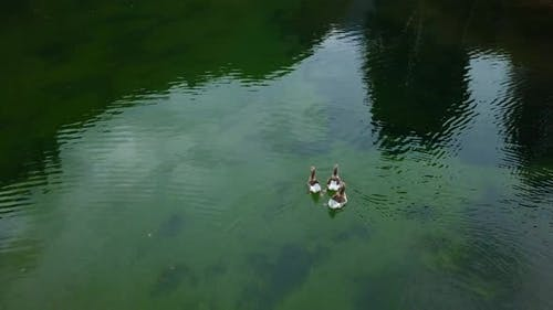 Three Ducks In A Lake Filmed From Above