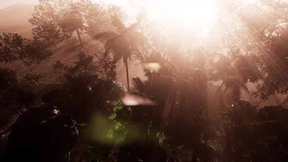 Thumbnail for Incredible Tropical Green Forest View with Sun Flare in Morning.
