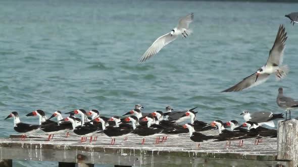 Thumbnail for Birds wildlife mexico