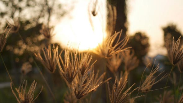 Thumbnail for Evening Grass