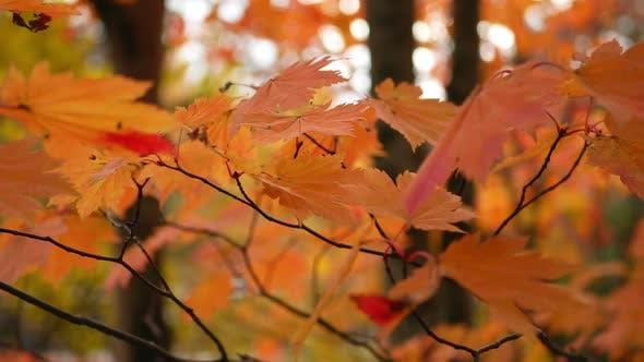 Thumbnail for Leave Autumn